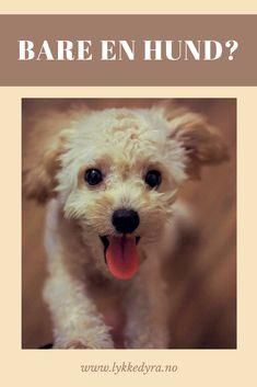 Bare en hund eller menneskets beste venn? Hvordan hunden påvirker menneskers liv. Animals, Animales, Animaux, Animal, Animais