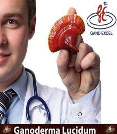 GANO EXCEL Ganoderma Lucidum  www.ganoexcelshop.gr Healthy Food, Healthy Recipes, Shop, Health Foods, Health Recipes, Healthy Nutrition, Healthy Foods, Healthy Eating, Healthy Cooking Recipes
