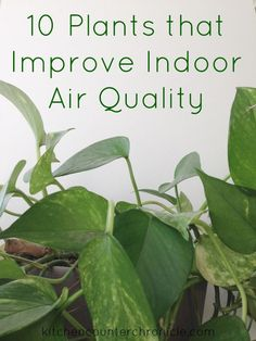 10 plants that improve indoor air quality - make your home cleaner and safer for your family with the addition of houseplants.
