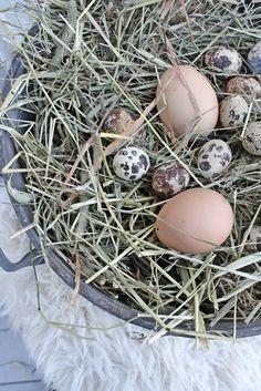 Det er blitt ettermiddag å jeg koser meg med å pynte litt ute til påske..En lykt blir tent og egg,kvist,fjær og nytt i dekorasjonene i ...