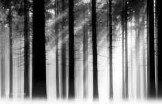 Photo The Code par Lars van de Goor on Monochrome Photography, Art Photography, Travel Photography, Tree Faces, Travel Images, World Best Photos, Tree Art, Lightroom Presets, Coding