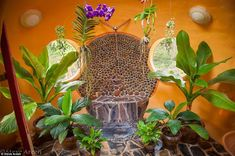 Building Earthen Dome Homes in 6 Weeks - DIY Tadelakt, Dome House, Mystique, Natural Building, Earthship, Tropical Houses, Tropical Plants, House Built, Stone Mosaic