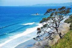 Pohutukawa - the New Zealand Christmas Tree