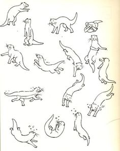 how to draw otters - Google Search