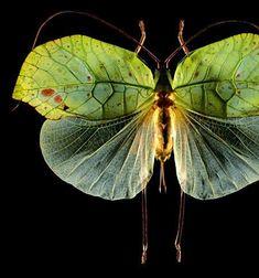 Mariposas de hojas