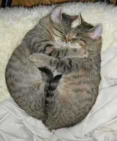 .Un día dos gatos
