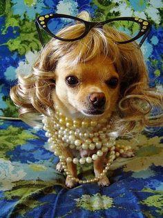 Craziest Animal Hairstyles Funny Strange