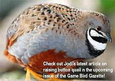 Check out Jodis latest article on breeding, hatching & raising quail in the upcoming Gazette!