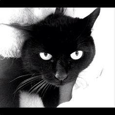 norman reedus cat | ... To 'Walking Dead' Star Norman Reedus's Black Cat, Eye In The Dark