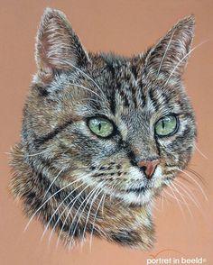 My new softpastel drawing from my own cat \'tom\'. www.portretinbeel... #carandache #catdrawing #catportraits #pastelmat #softpastel #realism #dogdrawings #animallovers #animalart #pastelpensils #artistic_unity #animalportrait #realisticdrawings #dogart #instadraw #instadrawing #artmagzz #artfeedr #artforlife #tabbycat #petportrait #pencilportrait #pencilartist #pastel