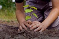 Plant A Tree - http://www.eventsnode.com/hyderabad/event/plant-a-tree/