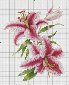lillium oriental