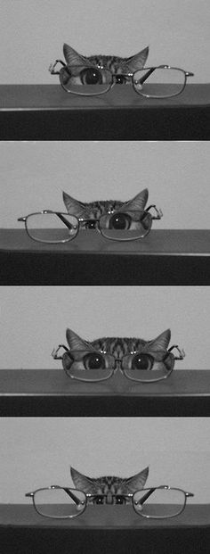 Reminds me of my kitties - AWW - - kitty & glasses I'm training to be a private eye. Let's see should I use this eye or this eye or both eyes? I think this might be harder than I thought. The post Reminds me of my kitties appeared first on Gag Dad. I Love Cats, Crazy Cats, Cute Cats, Funny Cats, Funny Humor, Cats Humor, Cat Fun, Silly Cats, Funny Sayings