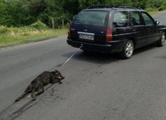 Petition against ongoing animal cruelty in Bulgaria all people should know and… Hate People, Cruel People, Horrible People, Stupid People, Stop Animal Cruelty, Save Animals, Animal Welfare, Animal Rights, My Heart Is Breaking