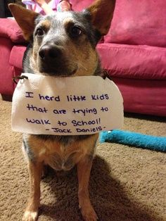 Dog Shame, for my sis and her heeler. Aussie Cattle Dog, Australian Cattle Dog, Australian Terrier, I Love Dogs, Puppy Love, Cute Dogs, Funny Dogs, Funny Animals, Cute Animals
