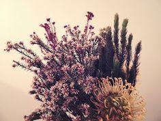 Mademoiselle Cosmopolite: Cette semaine, dans mon pot Mason: Fleurs d'automne Pot Mason, Mason Jars, Pots, Mademoiselle, Dandelion, Flowers, Dandelions, Mason Jar, Taraxacum Officinale