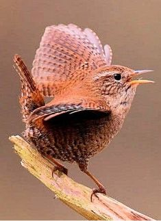 Cute Birds, Pretty Birds, Small Birds, Colorful Birds, Beautiful Birds, Animals Beautiful, Cute Animals, Bird Pictures, Animal Pictures
