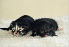Little ones!
