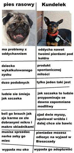 Funny Animal Videos, Funny Animals, Wtf Funny, Funny Memes, Funny Lyrics, Polish Memes, Weekend Humor, Avatar, Dog Pattern