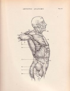 1941 Vintage Print Human Anatomy Illustration  Wall by AgedPage, $11.00 #agedpage