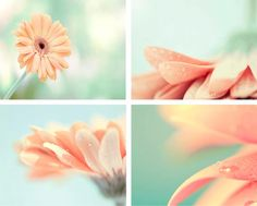 SALE , Peach And Mint, Print Set, Photography Set, Melon, Mint, Pastel, Spring Wall Decor, Floral, 8x10 Print Set. $55.00, via Etsy.