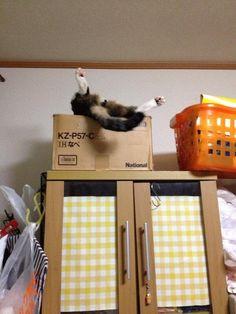 【悲報】「野生の血」を完全に無くしてしまった猫の末路 (画像あり)wwwwwwwww