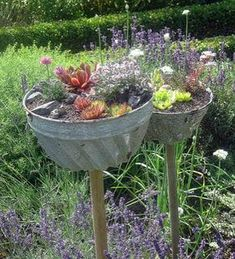 Fantastic Totally Free vintage garden planters Thoughts Growing pots, showers, plus 50 % boxes packed with blooms include attraction to any back garden, nevertheless . Sempervivum, Container Flowers, Container Plants, Container Gardening Vegetables, Vegetable Garden, Autumn Garden, Plantation, Small Gardens, Garden Planters