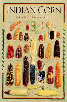 The colors & texture of Indian corn adds an instant rustic look to your fall decor. These Indian Corn Decorations are easy to make and inexpensive, too. Glass Gem Corn, Popcorn Seeds, Creamy Polenta, Corn Maze, Harvest Time, Amazing Gardens, Agriculture, Garden Design, Food And Drink