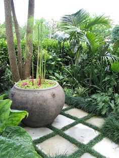 Balinese garden, feature pots, tropical gardens