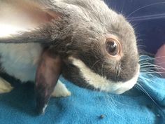An app without a commercial model is just like my needy, disabled rabbit - it might look awesome but it will take all your cash to keep it alive.    TechStartSMART