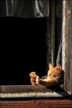Ahh. A good stretch in the warm sun.