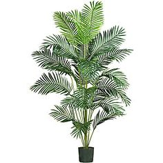 @Overstock.com - Paradise Palm 7-foot Silk Tree - Bring the tropics home with this silk palm tree. This artificial palm tree looks the same as a real tree, without requiring upkeep or attracting bugs. It stands seven feet tall and features a dozen fronds, covered by styled leaves made of polyester.  http://www.overstock.com/Home-Garden/Paradise-Palm-7-foot-Silk-Tree/3967122/product.html?CID=214117 $111.63