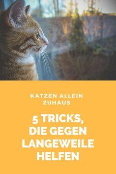 Irgendwann müssen wir alle unsere Miezen einmal allein daheim lassen. Ist deine Katze allein zu Hause, kannst du ihr mit den folgenden 5 Tricks die Wartezeit auf deine Rückkehr angenehmer gestalten.