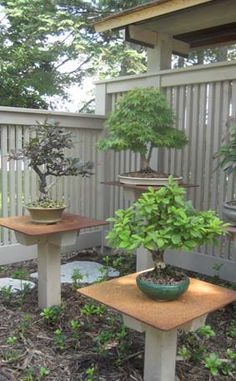 Bonsai bench attached to a building bonsai pinterest for Indoor gardening minneapolis