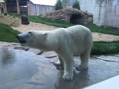 """""""Free zoo! The new polar and grizzly bear exhibit is awesome. Visiting in the winter is fun too. Lots of indoor exhibits."""" - Julie C."""