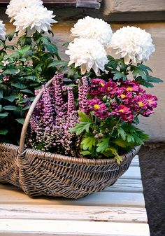 Container Gardening - Flowers In A Basket! Love Flowers, My Flower, Flower Power, Beautiful Flowers, Wedding Flowers, Flowers In Baskets, Garden Basket, Container Flowers, Beautiful Gardens