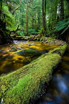 """Mt. St. Gwinear"" Mt. Baw Baw National Park,  Victoria, Australia, photo by John Dekker"