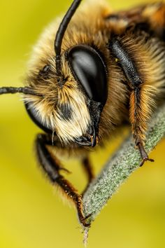 Bees - The only reason you are ALIVE is that the bees decided to let you live. Insect Photography, Animal Photography, Buzzy Bee, Mason Bees, Bee Do, I Love Bees, Bees And Wasps, Fotografia Macro, List Of Animals
