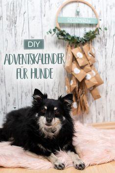 DIY|| Adventskalender für Hunde aus Papier selbermachen. Hundefreundliche Adventsleckereien werden zum täglichen Schnüffelspiel.#diy #hund #hundeliebe #adventskranz Diy Paper, Lettering, Cats, Tricks, Diy Ideas, Blog, Paper, Dog Things, Dog Owners
