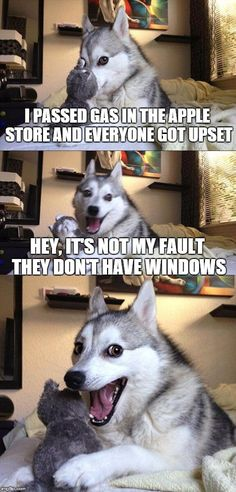 Bad Pun Dog | I PASSED GAS IN THE APPLE STORE AND EVERYONE GOT UPSET HEY, IT'S NOT MY FAULT THEY DON'T HAVE WINDOWS | image tagged in memes,bad pun dog | made w/ Imgflip meme maker