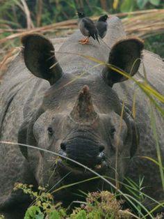 Nepal, Trekking, Places To Go, Elephant, India, Animales, Goa India, Elephants, Hiking