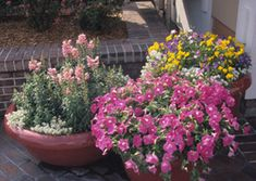 Landscaping with Containers - Successful Container Gardens - University of Illinois Extension