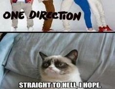 Grumpy Cat On One Direction Funny Pic