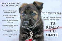 I am a forever Dog....  Not an until...  It's really that simple!