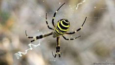 Image result for spiders colourful
