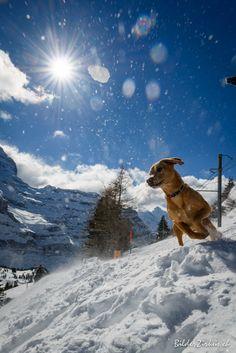 Jump Mount Everest, Mountains, Dogs, Nature, Travel, Good Photos, Naturaleza, Viajes, Trips
