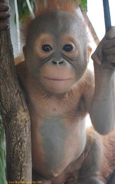 Jemmi to be Budi's Buddy? | International Animal Rescue