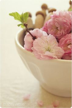 blossoms in a bowl