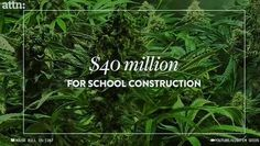 Colorado used $40 MILLION in taxes from legal marijuana sales alone to help rebuild public schools and provide opportunities for our future's youth. Think of the good that some legalization could do across the country especially in regards to reducing the prison population.  #prison #weed #drugs #medicine #legal #marijuana #medicalmarijuana #doctor #million #laws #boulder #420 #colorado #instagood #dogood #helping #amazing #school #learn #education #teach #teacher #college #university #high…