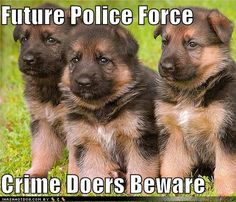 Police Puppies!Brought to you by Cookies In Bloom and Hannah's Caramel Apples   www.cookiesinbloom.com   www.hannahscaramelapples.com
